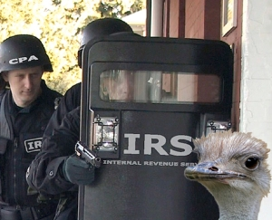 IRS and ostrich