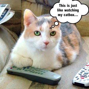 Cat with remote